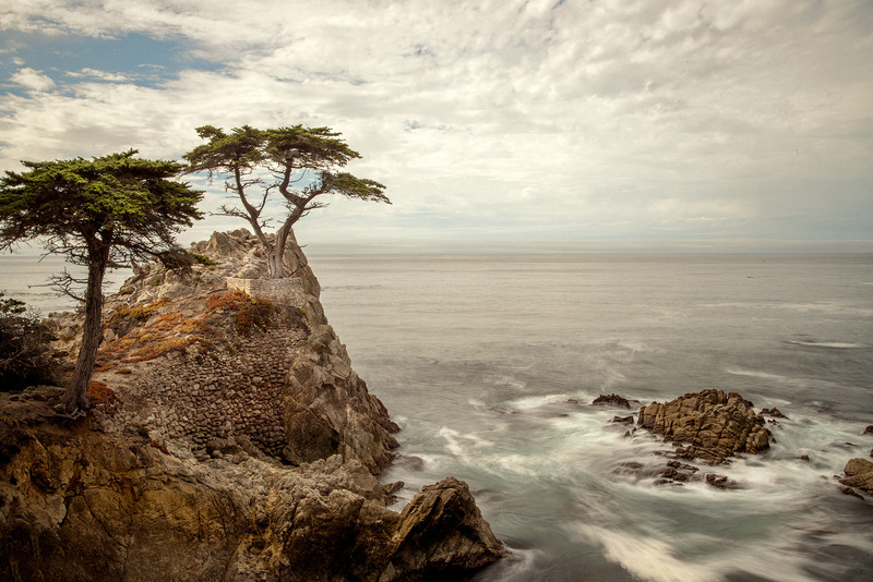 Lone Cypress, 17 Mile Drive, California